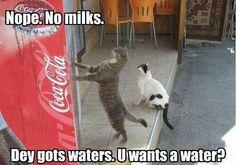 Yeah...I'll haz a waters, den.