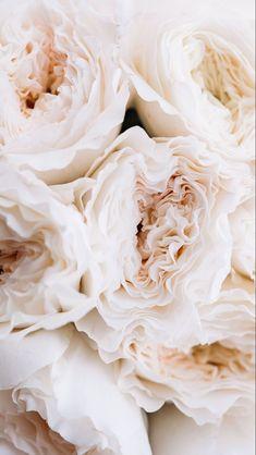 Garden roses for the win 🌹