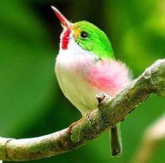 http://gobtube.com Colour bird
