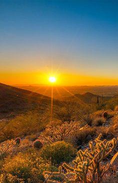 Sonoran Desert in Arizona,USA