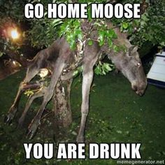 Go home moose. You are drunk.