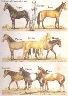 colores de los caballos