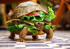 Two of my favorite things combined...turtles and cheeseburgers