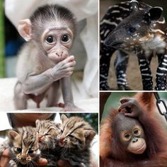 Photos of Cute Baby Zoo Animals Baboon