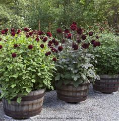 Thrilling About Container Gardening Ideas. Amazing All About Container Gardening Ideas. Flower Planters, Garden Planters, Container Plants, Container Gardening, Back Gardens, Outdoor Gardens, Plantar, Dream Garden, Garden Planning