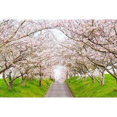 【ari_gato_goza_ima_su】さんのInstagramをピンしています。 《#千葉県 #千葉 #秘境 #自然 #田舎 #桜 #サクラ #春 #Japan #Japantrip #Nature #CountrySide #NextToTokyo #blog #chiba #cherryblossom #sakura #spring #일본 #일본여행 #일본시골 #여행 #시골 #일본인 #치바 #치바현 #비경 #벚꽃 #사쿠라 #봄》