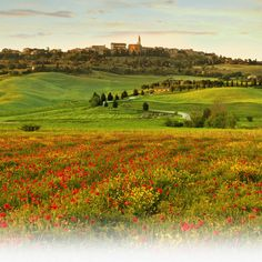 Emilia Romagna,home of Parma Ham's  Reggiano Parmigiana Cheese...  some of the best food in the world