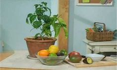 Grow Houseplants from Produce