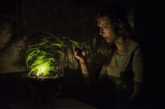 Biorevolutie? Een plant in een glazen vaas die, als je 'm aanraakt, ervoor zorgt dat er licht gaat branden. Lees meer over dit biodesign van Ermi van Oers.