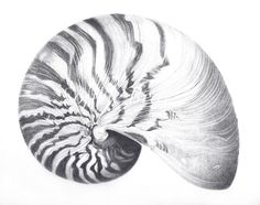 Shells by Sophie Bray, via Behance