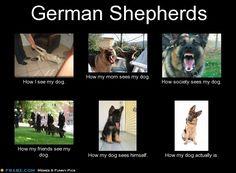 German Shepherds... - Meme Generator What i do