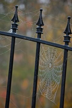 spider web in fall Photo:Robin Dance ~ PENSIEVE