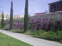 Revestimiento vegetal de muros de hormigón TECROC URBAN en Jardín del Turia, Valencia.