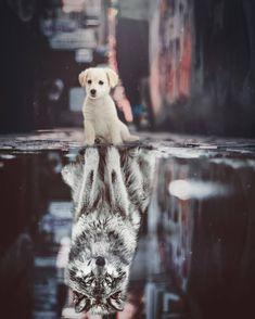 Its not about what people think.Its how you feel inside. Wolf Spirit SpiritAnimal InnerPeace Awakening Spirituality Woke Faith BelieveInYourself Believe Hope GodsWolf GodsKnightWolf Confidence Rise Grow GodOverEverything AllGloryToGod Baby Animals Super Cute, Cute Little Animals, Cute Funny Animals, Cute Cats, Cute Dogs And Puppies, Baby Dogs, Lion King Animals, Cute Cat Wallpaper, Wolf Spirit Animal