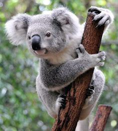 13 of the cutest tree-dwelling animals in the world