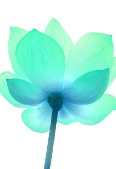 arte em flor