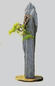 Bonsai Tree Care, Bonsai Tree Types, Mini Bonsai, Indoor Bonsai, Waterfall Fountain, Pot Plante, Terrarium Plants, Bonsai Garden, Small Trees