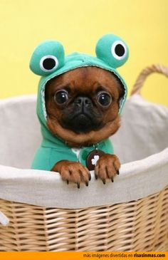 """I keep saying """"ribbittt"""" but they're not buying it, what do I do now????"""