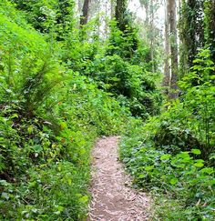 Hiking San Francisco Urban Jungles and City Heights 5 miles, 3 hours