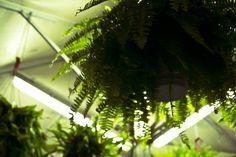 Botanic. 30/12/2012