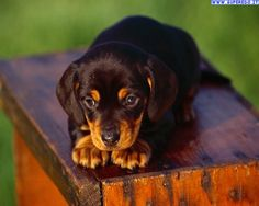 cani cuccioli - Cerca con Google