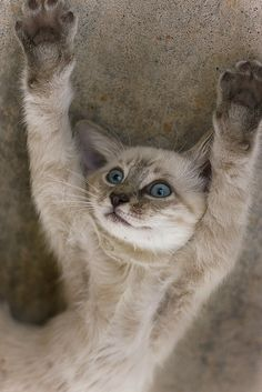 Put Your Paws Up by Domain Barnyard, via Flickr