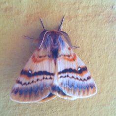 moth by becky