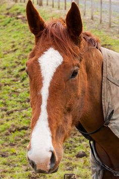 Horse Equines and humans obtain an ancient connection. Asian ramblers no doubt domesticated the first horses some 4000 years back…