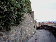 Cinigiano (Valle dell'Ombrone - prov. Grosseto)