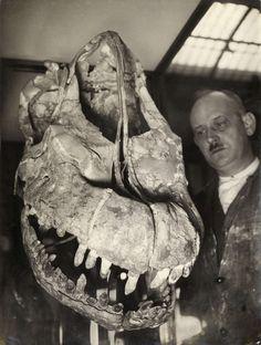 Giraffatitan+in+1934.jpg (736×974)