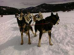 Go dogsledding? Check.