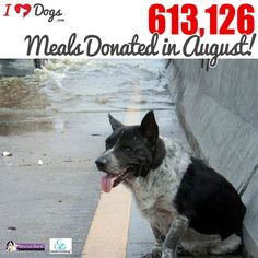 In August you helped us reach yet another record by funding 613,126 meals for shelter & rescue dogs through Rescue Bank!!! It couldn't have come at a better time as we were able to send out 4 truck loads of food to shelters affected by the flooding in Louisiana! Why? #BecauseEveryDogMatters