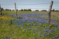 Texas Hill Country | Rainbow International of the Hill Country