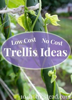 Low Cost & No Cost Trellis Ideas