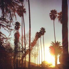 Palm trees a glo.