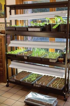 Indoor Grow Lights: Two new and better choices, T8 and T5 bulbs, are now available. Old-line T12 fluorescent bulbs are still cheap and easy to find, but  T8 bulbs, are up to 40 percent more efficient. Plants get plenty of light when grown within 2 inches beneath T8 bulbs.