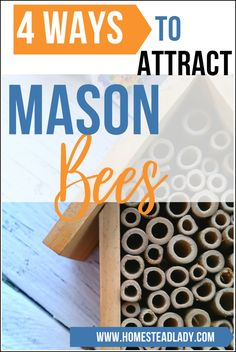 4 simple steps to attract mason bees to fruit trees l Includes instructions for DIY mason bee house, facts, care and use of mason bees in the home orchard l Homesteadlady.com #bees #masonbees #pollinators #homesteading #fruittrees #organicorchard Growing Herbs, Growing Vegetables, Garden Crafts, Garden Projects, Mason Bees, Natural Pesticides, Bee House, House Information, Homestead Farm
