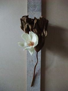 Can this be used as a wall piece on the stairs or the entrannce? Ikebana Flower Arrangement, Ikebana Arrangements, Modern Flower Arrangements, Cactus Flower, Flower Vases, Flower Art, Sogetsu Ikebana, Exotic Flowers, Purple Flowers