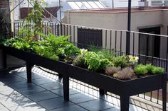 nice way to plant a small herb type garden in apt! :) thanks for idea @Cassie G G Snow
