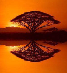 The sun set's, the water calms, reflecting life in the mirrored image of the many intertwined branches of Life's tree.