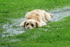 I saved my dog from my swimming pool. - Michael R. #OneBraveThing