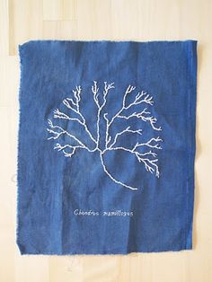 Dyed muslin and embroidery by Jessica Polk, inspired by vintage cyanotypes of Anna Atkins. #textiles