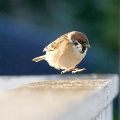 Why are there so many good photos of these hoppy little sparrow children Cute Birds, Pretty Birds, Beautiful Birds, Animals Beautiful, Bird Pictures, Cute Pictures, Nature Animals, Animals And Pets, Cute Baby Animals