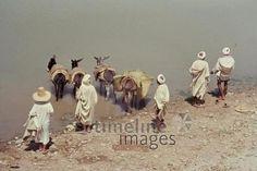 Esel am Sebou, 1962 Czychowski/Timeline Images #1960 #60er #60s #Marokko #Morocco #Ufer #Fluss #Eselkarawane #Karawane #Tränke #River
