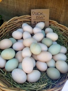 Duck Eggs, great colors.