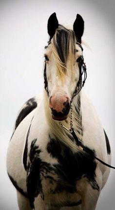 Beautiful Equine