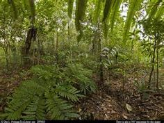 forest plants - Bing Images