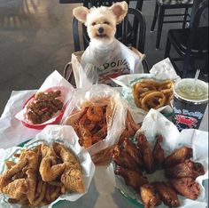 You'd honestly rather go on a date with your dog than anyone else: | 18 Pictures That Are Literally You As A Dog Owner