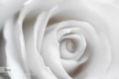Rose by renemerlijn. Please Like http://fb.me/go4photos and Follow @go4fotos Thank You. :-)