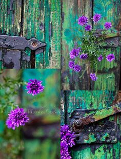 garden gate door